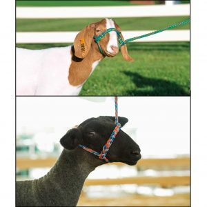 sheep goat poly rope halter