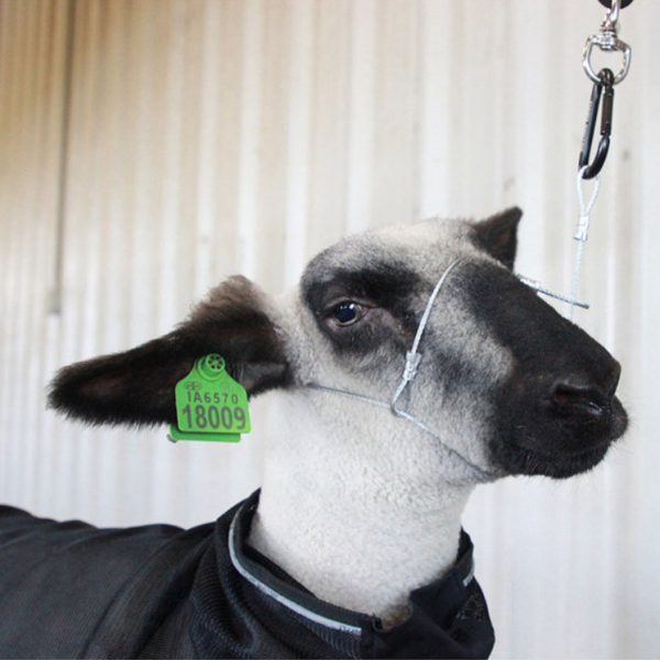 Sheep and Goat Cruise Control Cable Halter