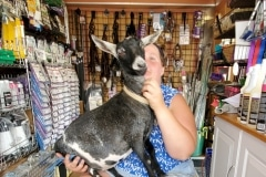 Laura-and-Her-Goat